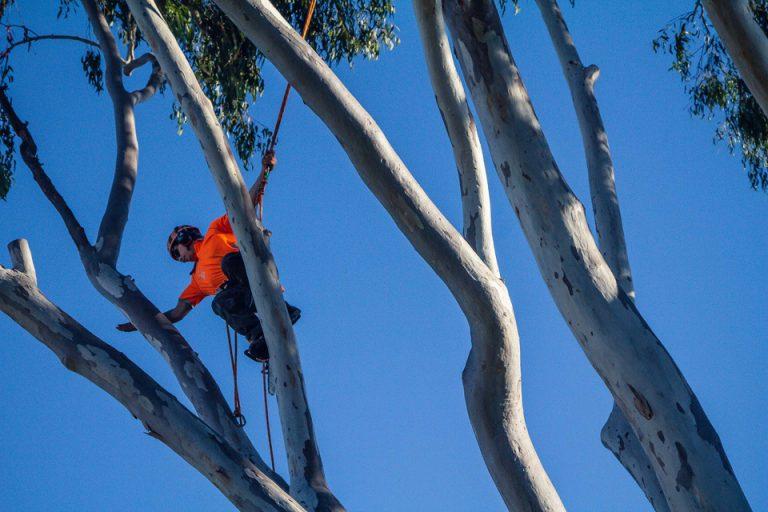 Tree Trimming Mackay